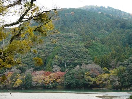 肱川沿いの紅葉