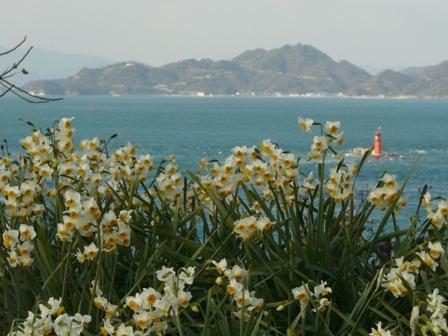 水仙 (大角海浜公園) 4