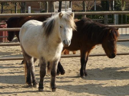 野間馬 3