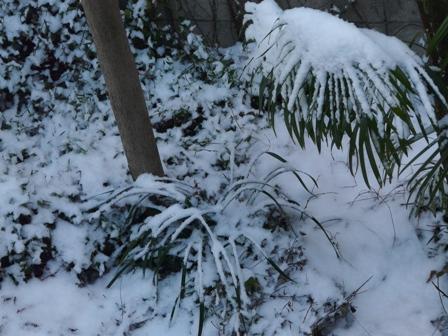 松山積雪 2