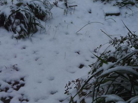 松山積雪 1