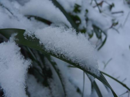 松山積雪 3