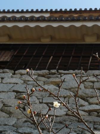松山城と梅 2