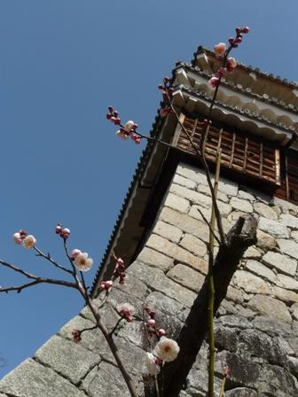松山城と梅 3