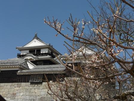 松山城と梅 5