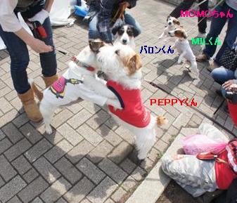 PEPPY2_20120417181021.jpg