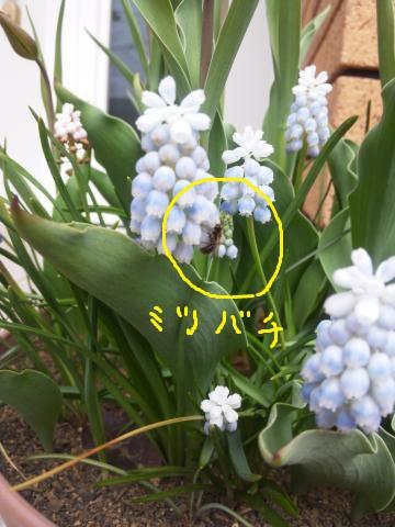 DSC_1464_convert_20120427101357.jpg