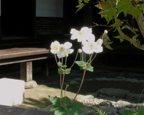 篠山 115
