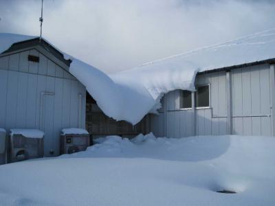雪景色 会社2