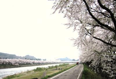 桧木内川堤(5月4日)