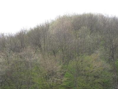 春山の風景