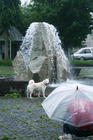 雨も関係なしのたつのすけ 今日はとうちゃんのモデルさん