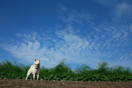 雲とオレともさもさアスパラ