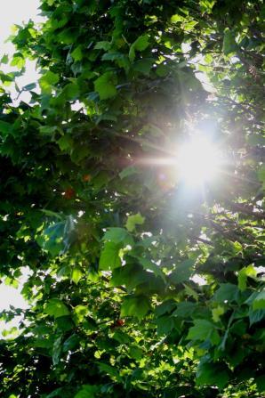 中学校のグランドの樹