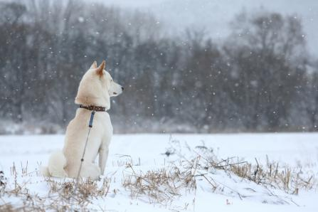小雪ハラハラ舞う雪の降り始め