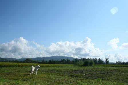 ツルッとした青空に下のほうだけぽっかりぽっかり描いたような雲