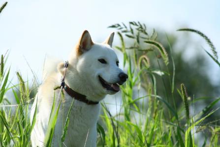 エノコログサ=狗(犬)の尾の草なんだ 知らんかった