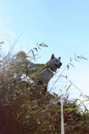 天高く 犬肥えて欲しい 秋