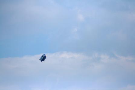 空飛ぶドラエモンに見えました