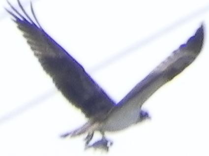 11-02-21-F16.jpg