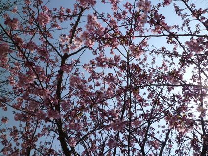 11-03-31-F16.jpg