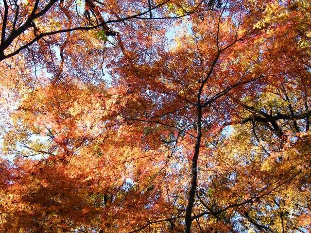 神宮御苑紅葉
