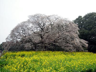 2010-04-12-1.jpg