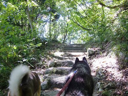 大源太湖遊歩道の階段