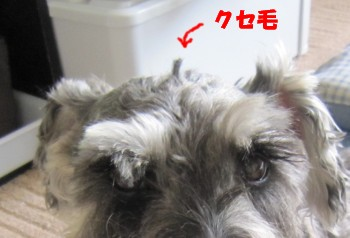 IMG_4925_3.jpg
