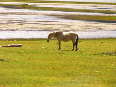 湿原と白馬@香格里拉