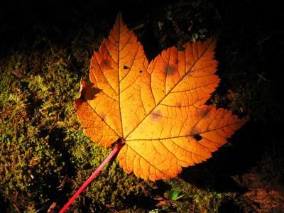 一片の秋@雨崩