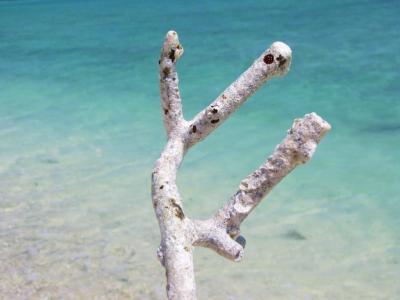 白サンゴとマリンブルー@武富島