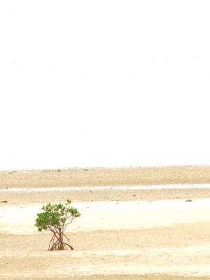孤独@西表島