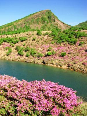 ミヤマキリシマと韓国岳@えびの高原