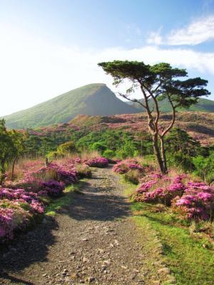 朝一番の韓国岳@えびの高原