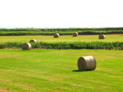 牧草ロールのある風景②@サロベツ
