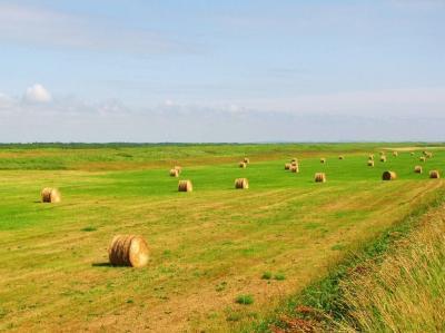 牧草ロールのある風景①@サロベツ