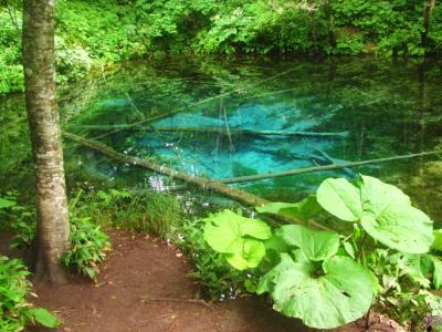 神秘の泉@神の子池