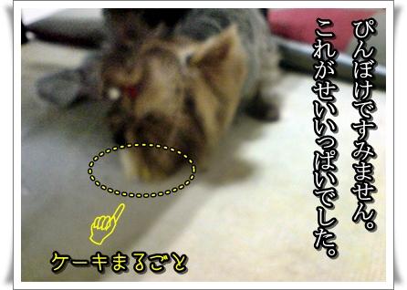 20101224192245p.jpg