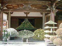 中尊寺菊まつり14