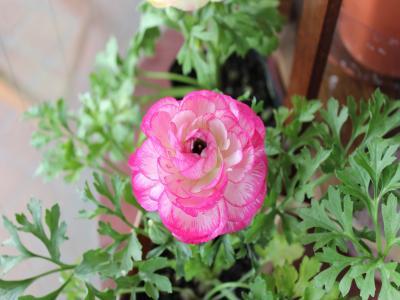 写真-9_convert_20110225155203