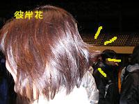2010_1_16_4.jpg