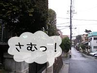 2010_2_12_4.jpg