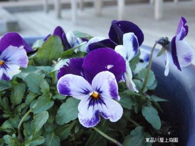 biora5_20110102161522.jpg