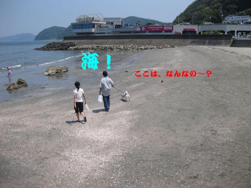 旅犬2010-8~1