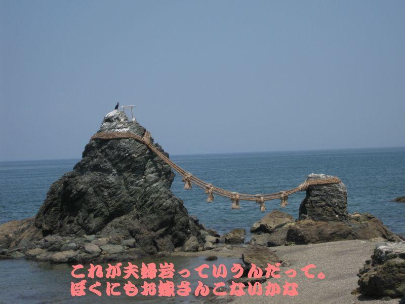 旅犬2010-7~1