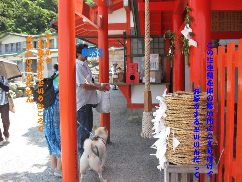 旅犬2010-5~1