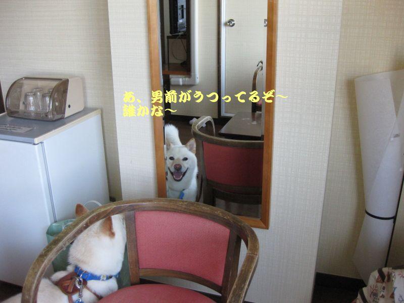旅犬2010-13~1