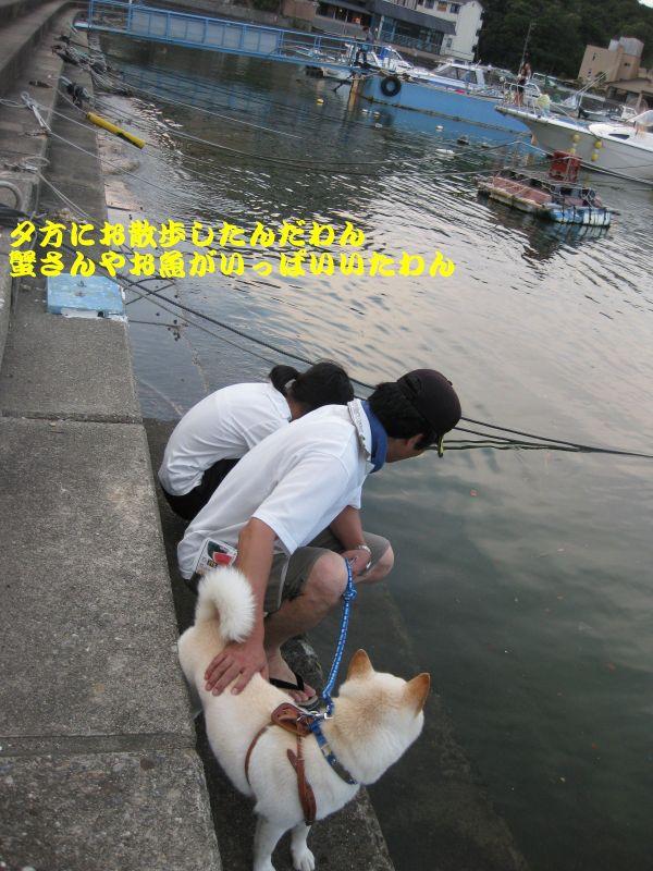 旅犬2010-16~1