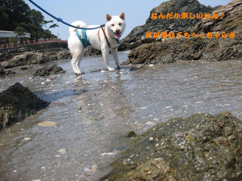 旅犬2010-9~1